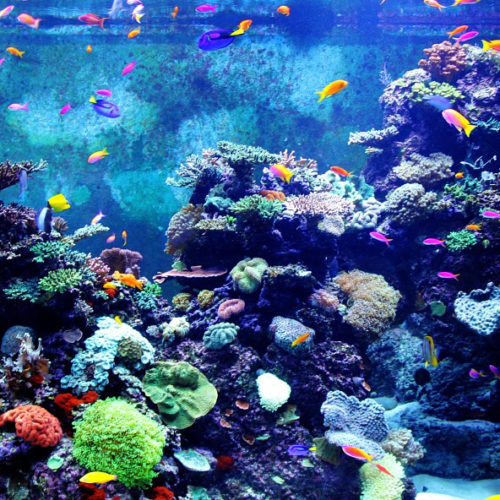 lien vers Aquarium de Vendée