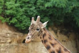 lien vers le Zoo des Sables